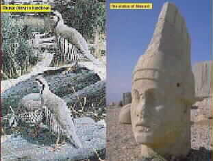 The very Popular Bird of Chukar and The Statue of Nemrud